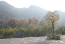 红枫之秋图片