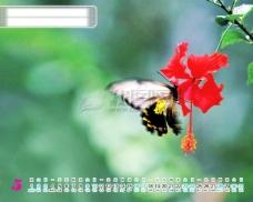 2009年日历模板_2009年台历psd模板_放飞青春_自然和谐(全套共13张含封面)