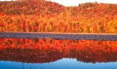 红叶林图片