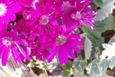 菊花展图片