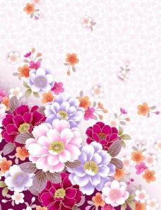 菊花背景图片