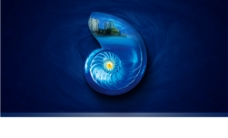 精美海螺图片