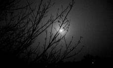白色月光图片