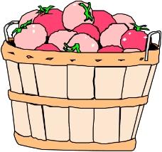 蔬菜水果1075