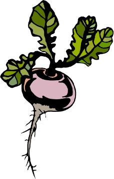 蔬菜水果1194