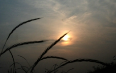 莲清落日图片
