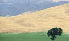 沙漠绿洲图片