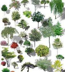 北方树种图片