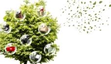 禮物樹圖片