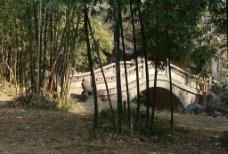 竹林中的小桥图片
