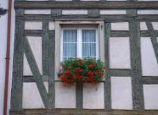 外窗绿化图片