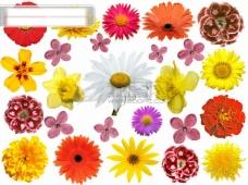 五颜六色的花朵图片素材