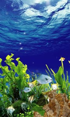 海底世界·海鲜图片