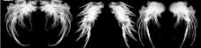 超赞的天使翅膀大全图片