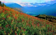 山野风景图片