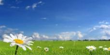 草地天空图片