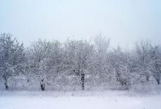 伊犁雪景图片
