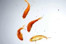 水中鱼图片