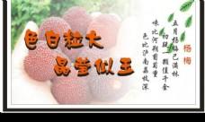 杨梅广告牌