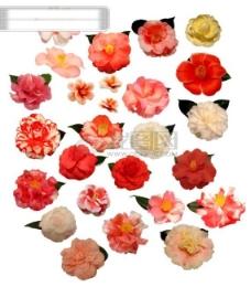 二十余种高清茶花分层素材