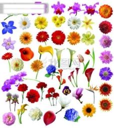 高清花卉分层素材