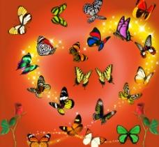 蝴蝶组合图片