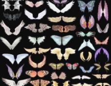 美丽的翅膀图片